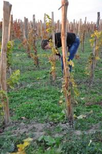 Návštěva vinařství Strekov 1075